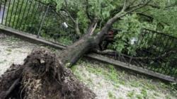 Vjetar čupao drveće iz korijena