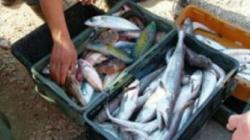 Pad uzgoja ribe u bh. ribnjacima i do 20 posto