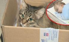Ulična mačka spasila život napuštenoj bebi od 12 nedelja!