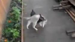 Ovako izgleda kad pas nosi mačku kući!