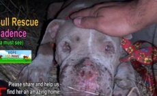 Otkrili su zlostavljanog psa koji je živio na ulici. Ono šta se zatim dogodilo je nevjerovatno.