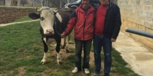 Bivši logoraš Husein Kasić dobio dugo priželjkivanu kravu!