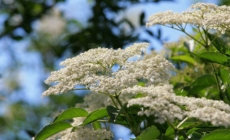 HIPOKRAT: 'Ovo je Božja biljka koja može zamijeniti sve lijekove!