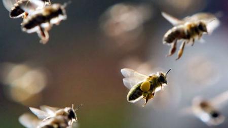Kada vas ubode osa, pčela ili stršljen – ovo će vas spasiti boli i otekline
