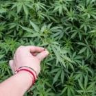 mup hnk zaplijenjena veca kolicina droge i oruzje
