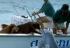 Delfin iskočio iz mora i cmoknuo psa u njušku!
