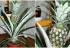 Kako odgajiti ananas u saksiji: Unesite egzotiku u vaš dom