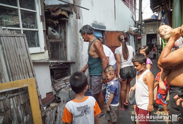 majmun-spasioci-tajland-foto-hefty-1460649784-886471