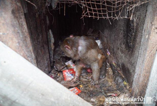 majmun-spasioci-tajland-foto-hefty-1460650227-886481