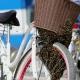 Pa se ti sada vozi: Roj pčela se udobno smjestio na biciklu…