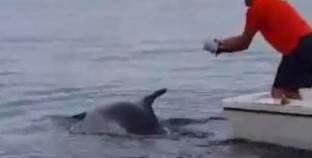 Heroji iz Senja: Spasili delfina koji se zapetljao u parangal