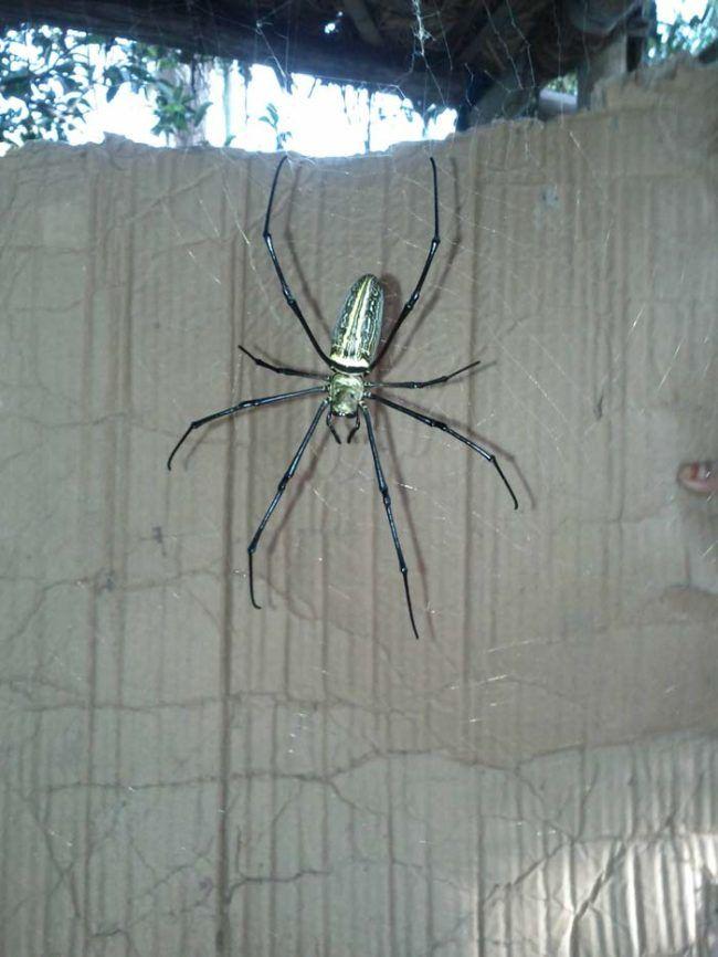 ogromni-pauk-2