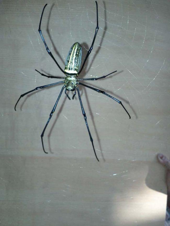 ogromni-pauk-3