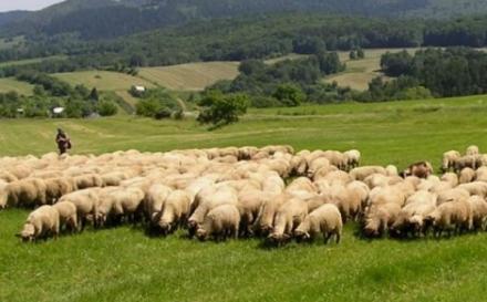 TOR – SAOPŠTENJE ZA JAVNOST: Uključiti i BH poljoprivrednike u pregovore o adaptaciji SSP