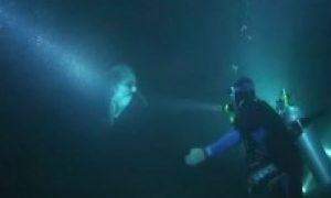 Delfin - Screenshot: Youtube