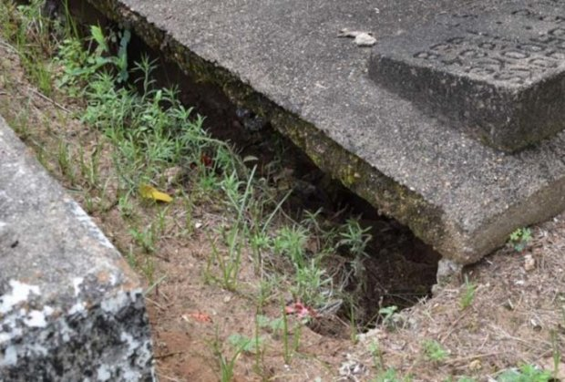 groblje-kosti-foto-reddit-cynicalsoup-1468443263-949437
