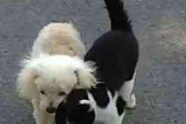 bez komentara macka pomaze slijepom psu da se vrati kuci