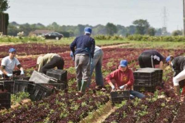 britanski fameri traze radne vize za bosance i ukrajince