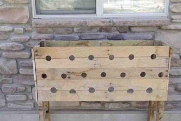 genijalno izbusila je 19 rupa na drvenoj kutiji pet mjeseci kasnije cijeli njen komsiluk je bas ljubomoran