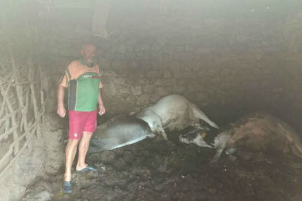 steta u domacinstvu kod niksica grom usmrtio dvije krave dva bika i jarca
