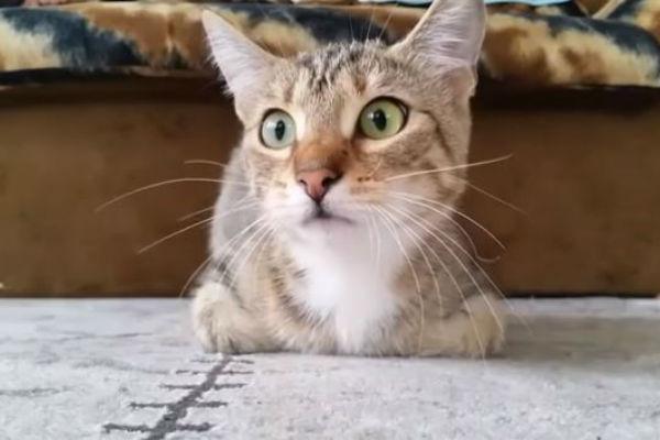 macka koja gleda horor postala je hit na internetu njena reakcija je neverovatna