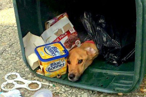 zena je bacila svog psa u kontejner nakon 3 dana natjerali su je da zazali zbog toga
