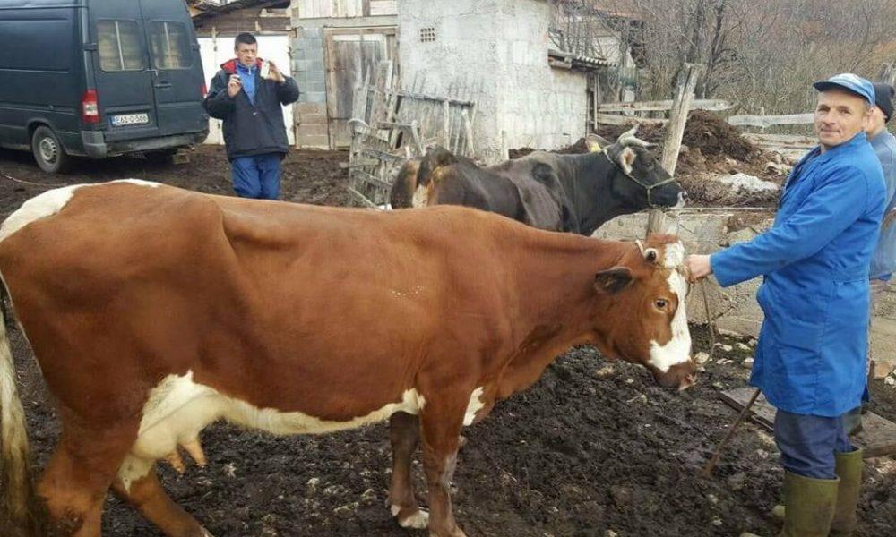naser oric donirao dvije krave porodici herceglija kojoj je otrovana stoka