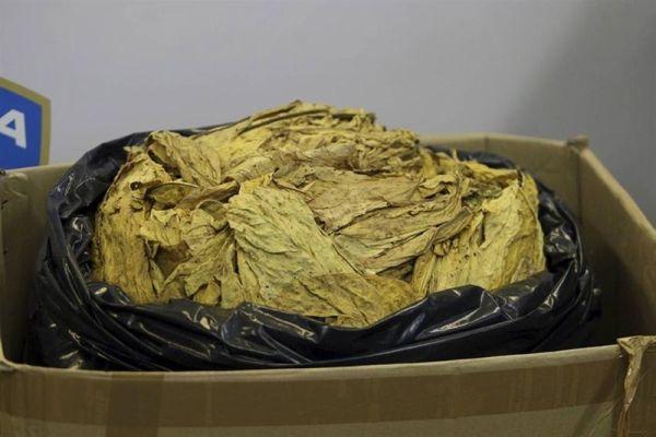 sluzbenici granicne policije brcko zaplijenili 400 kilograma duhana