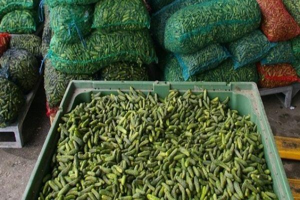 nijemci zele proizvoditi kornison u novom gradu