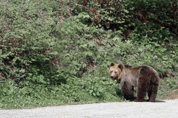 hercegovka otjerala medvjeda kada sam ga ugledala vrisnula sam