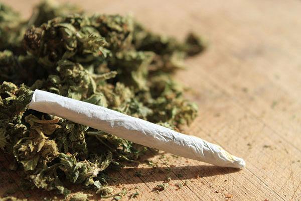 kanabis čuva mozak od starenja Cannabis-College1