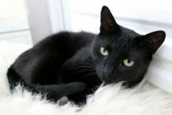 crna maca koja se širi