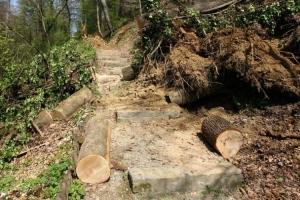 Uhapšen zbog nezakonite sječe 500 kubnih metara drveta