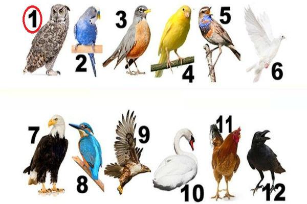 u kojem pticijem mjesecu ste rodeni da li ste mudra sova veseli kanarinac herojski jastreb mudra vrana ili prelijepi galeb