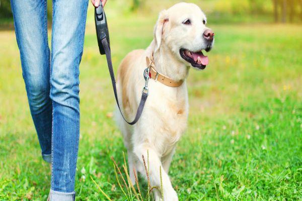 psi pate zbog nase opsjednutosti telefonima