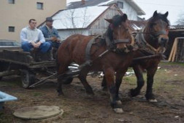 porodica banduka poredenje s konjem je kompliment