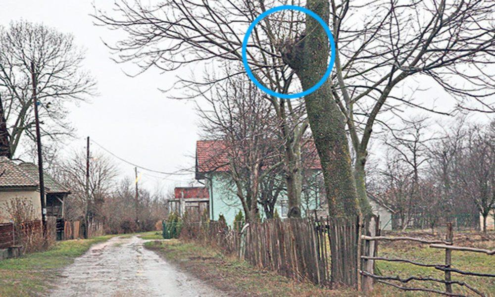 nenad se objesio pred kucom bivse djevojke krenula na posao i pronasla ga kako visi o drvo