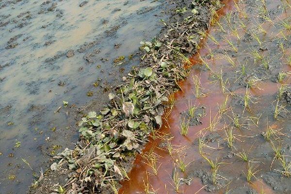 gracanica zemljiste u dolini rijeke sprece zagadeno teskim metalima