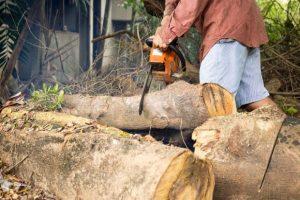 Sječa šume na Konjuhu ostavlja dugoročne štetne posljedice