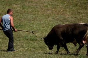 Muškarca nakon koride teško povrijedio bik, ljekari mu se bore za život