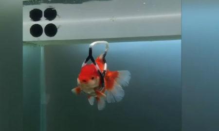ribe koje se vezuju za blizance romantični internetski profili za upoznavanje