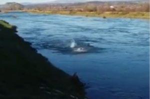 Hercegovac zaplivao u hladnom Trebižatu