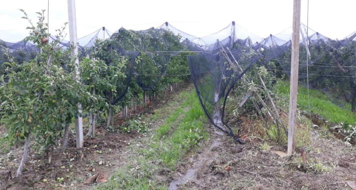 nevrijeme Gradacac - Nevrijeme uništilo voćnjake u Gradačcu: Za 20 minuta ostali bez jedinih prihoda