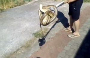 Žena u Hercegovini krenula praviti doručak i pronašla zmiju od dva metra
